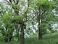 Парк шума Гази Баба во мај (153).JPG