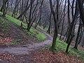 Склоновый лиственный лес на южном берегу верхнего Китаевского пруда.jpg