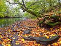 Тихо падало листя.jpg