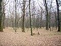 Украина, Киев - Голосеевский лес 213.JPG