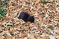 Ул.Сергеева-Ценского, кошка, 18.10.2011 - panoramio.jpg