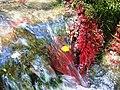Գետի մամուռ.jpg