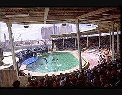 דולפינריום תל-אביב 1985.jpg