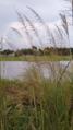 রাজাপুরের একটি প্রাকৃতিক দৃশ্য.png