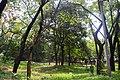 সেকশন-৪ রাজকড়ই, অর্জুন, হিজল.jpg