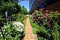 ロイズ ローズガーデン(Royce' Confect Rose Garden) - panoramio.jpg