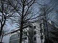 冬天的枯樹景象(只剩樹枝) - panoramio.jpg