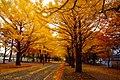 北海道大学(Hokkaido University) - panoramio (7).jpg