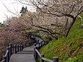 広橋梅林 Hirohashi-bairin 2011.3.15 - panoramio.jpg