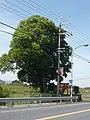 御所市小殿 かやの木淡島神社 Kayanoki-Awashima-jinja, Odono 2011.5.13 - panoramio.jpg