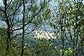 新丰司茅坪林场20150412 - panoramio (24).jpg