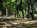 羅東林業園區 Luodong Forestry Park - panoramio.jpg