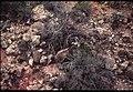 015 Grand Canyon Aerial of Burro Damage 1975 (4952172640).jpg