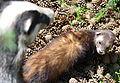 02014 Die Tiere von Waldkarpaten.JPG