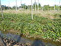 0581jfLandscapes Roads Vegetables Fields Binagbag Angat Bulacanfvf 21.JPG