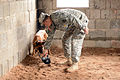 131st Military Working Dog Detachment device detection training 130611-A-HE359-092.jpg