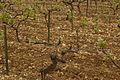 139 Châteauneuf-du-Pape vineyard.jpg