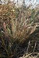 2-Fernlike-Plant-SK.jpg