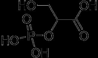2-Phosphoglyceric acid - Image: 2 Phosphoglycerate