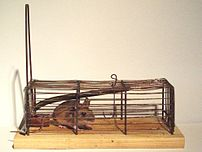 Mousetrap, mouse, bait (chocolate)