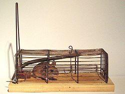 definition of mousetrap