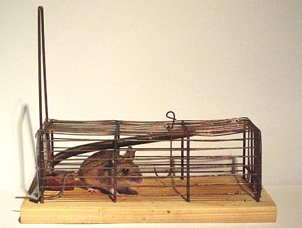 Mousetrap Wikiwand