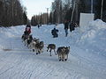 2008 Iditarod Willow (2312934934).jpg