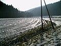 2009-02-03 Dunetal.JPG