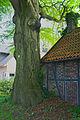 2010-05 Naturdenkmal Buche in Waltrop (NRW).jpg