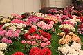 20100417 Floralien (0038).jpg