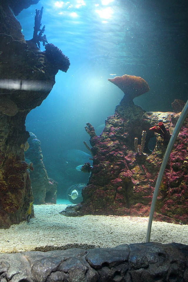 Sealife Centre_2