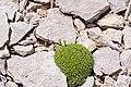 2015.05.24 12.22.32 IMG 2339 - Flickr - andrey zharkikh.jpg