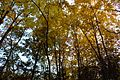 2016-11-25 Yashiro forest park,やしろの森公園 母屋 紅葉 DSCF6124.jpg
