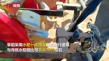 File:2020年5月27日 沙漠种稻!内蒙古巴彦淖尔试种5200亩旱稻.webm