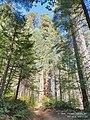 20210 Merced grove 2.jpg