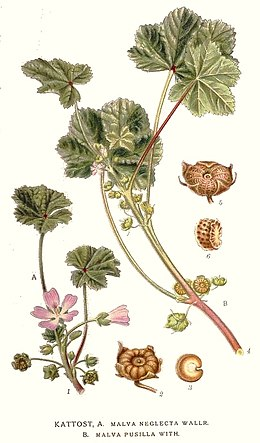 234 Malva neglecta.jpg