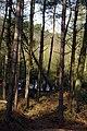 25.3.16 Delamere Forest 07 (25431638523).jpg