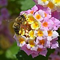 4Honey-Bee.jpg