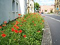 97688 Bad Kissingen, Germany - panoramio (88).jpg