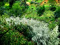 A@a colors palehori village cyprus - panoramio (9).jpg