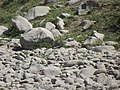 ARROYO SIN AGUA, EJIDO SAN RAFAEL, RAMOS ARIZPE COAHUILA - panoramio.jpg