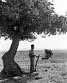 "A ""HAGANA"" MEMBER ON GUARD DUTY NEAR KIBBUTZ GAN SHMUEL. חבר הגנה ניצב בעמדת שמירה ליד קיבוץ גן שמואל, בשרון.D393-025.jpg"