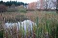 A Bullrush pond - geograph.org.uk - 1580060.jpg