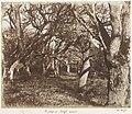 A Peep in Leigh Woods MET DP143488.jpg