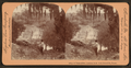 A Texas Eden, Landa's Park, New Braunfels, Texas, by Singley, B. L. (Benjamin Lloyd).png