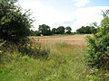 A field of ripening wheat beside the path - geograph.org.uk - 1411305.jpg