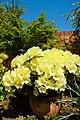 A garden near Scarborough-12 (4629134249).jpg