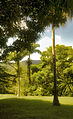 A green walk, Barbados (6873972542).jpg