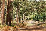 A late Summer's walk - Brownsea Island (30025193300).jpg