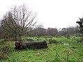 A wet meadow - geograph.org.uk - 1080789.jpg